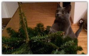 Campino mit ihrem ersten Weihnachtsbaum